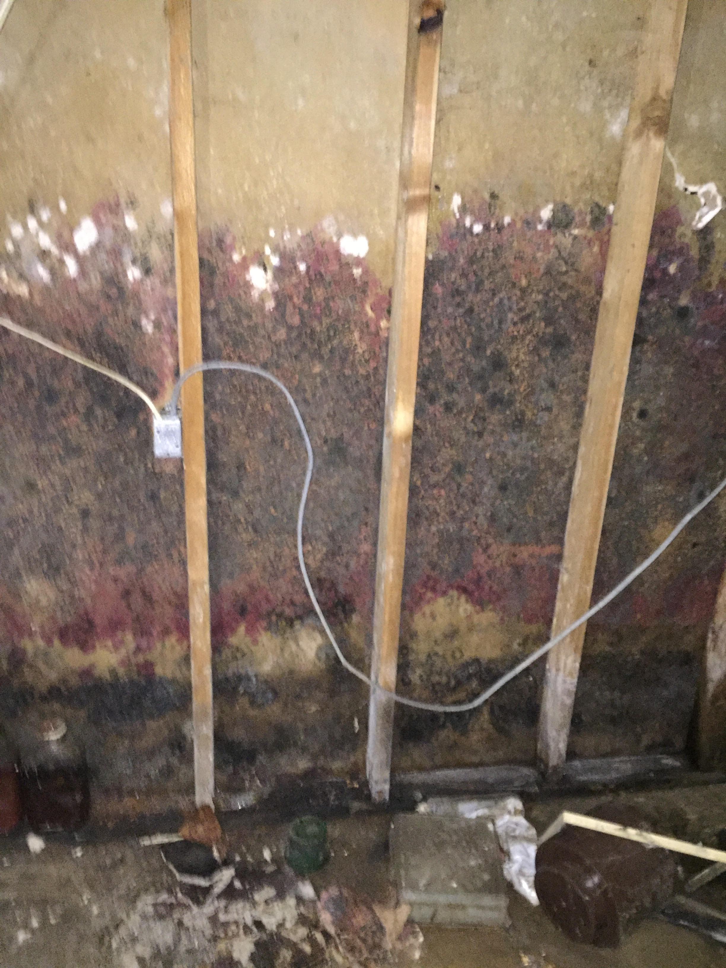 Mould Removal St Catharines Niagara Davies Environmental